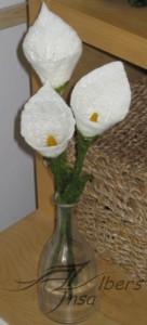 weiße Callas